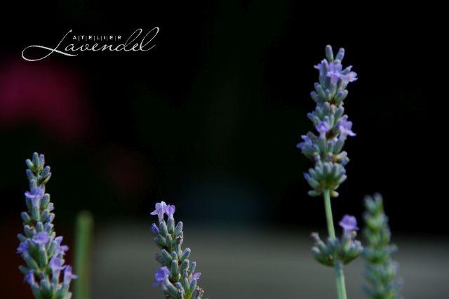 Handgemachte Waldorfpuppe aus dem Atelier Lavendel ist mit viel Liebe und Sorgfalt individuel aus natürlichen Materialien handgefertigt, einladend zum Spielen und Liebhaben